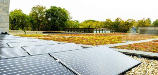 een plat dak met zonnepanelen en op de achtergrond is een dak met natuurlijke begroeiing.